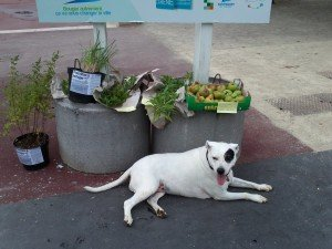 Aromatiques et Fruits en partage... place de la Mairie !!! dans Nos bacs de Partage IMG202-300x225